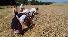 С ритуал започна жътвата в района на селата Голямо Соколово и Бистра