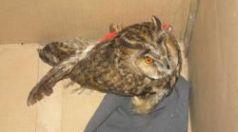 Спасиха намерена в Търговище ранена птица