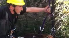 Търговищки пожарникари спасиха паднала в кладенец крава